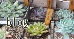 店主の、ほぼ私的なブログ。大好きな多肉植物やガーデニングの事、ショップの商品について気ままに綴っています。