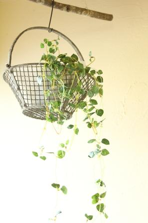 ガーデンワイヤーバスケット
